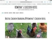 Home from Home chicken boarding @ Rowena's Chicken Hotel