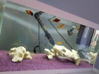 54 litre fishtank