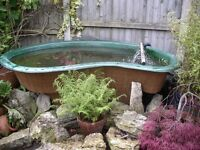 Fibre Glass Pond & Japanese Koi a complete set up for sale as closing down my pond