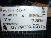 PUPPY CLASS. DRUMCHAPEL + GOVAN