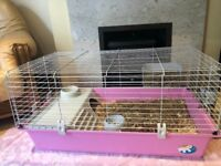Two baby girl guinea pigs + pink cage