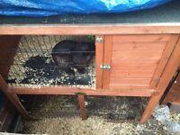 Rabbit hutch need gone asap