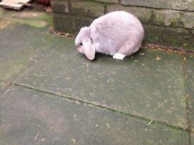 Beautiful grey and white rabbit