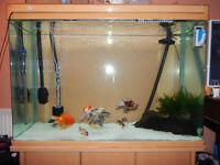 Large Fish tank!!