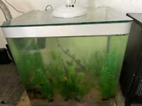 Large glass aquarium tank