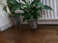 IKEA plant pots incl plants