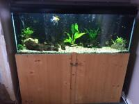 ***FULLY STOCKED FISH TANK AND EXTRAS REDUCED FOR QUICK SALE***