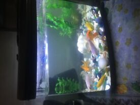 Aquarium Tank {Bow fronted tank}