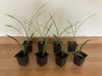 Palm tree pack