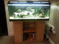 tropical aquarium fish tank & cabinet