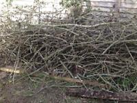 Free- branches cut down from large tree