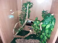 Viv exotic vivarium