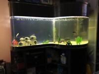 250L Tropical/Freshwater Aquarium