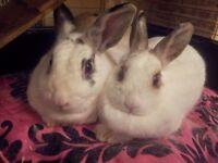 2 beautiful Rabbits