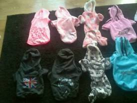 Many dog coats and jumpers for sale