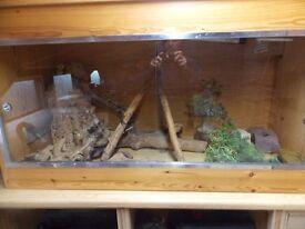 Full Vivarium Set Up - Hand made in Solid Wood