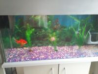 Fish tank and silver unit