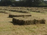 Conventional meadow hay bales 2016 £4