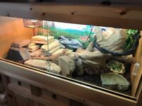 Hand made solid wood vivarium complete with accessories