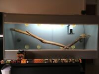 Vivarium for sale - in good condition with all equipment needed included in price