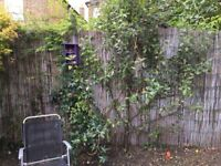 Gorgeous apple tree for sale