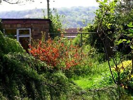 Special tenant wanted. must be keen on ecology. shared facilities sunny room broadband parking