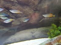 Rainbow fish and Gouramis for sale