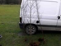 Silver Birch Trees. . . .