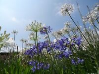 Part time Gardeners needed in Surrey and Hampshire