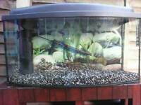 Full tropical fish tank & stand