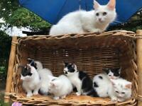 Half Price!!! Beautiful kitten for sale!!