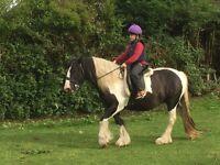 X2 ponies to part loan Hucknall 14.2hh
