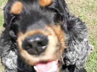 Experienced, Local Dog Walker- Lowestoft, Kessingland