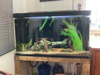 Fish tank 375 litres