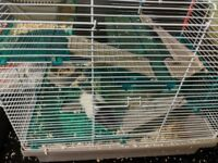 hamster with a cage