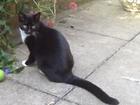 Please help. Our cat, Ruby, went missing Saturday 19 November from Kirkhill, Morpeth