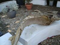 LARGE 6FT LONG PIECE OF DRIFTWOOD FOR GARDEN REDUCED ONLY £20 FOR QUICK SALE