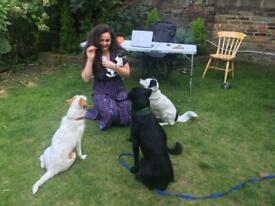Fully insured tax registered Veterinarian Pet Sitter