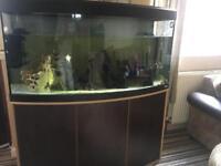 Fish tanks and fish