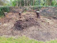 Compost/ mulch free to a good home
