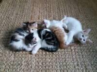 Gorgeous Kittens for sale ..buckingham area