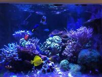 Various marine coral frags sps