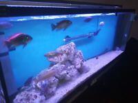 Aqua one .Four foot fish tank .