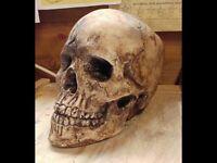Handcrafted full size skull