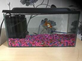 2 fishes, fish tank and accessories