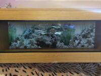 Reptile vivarium (47x18 inch)