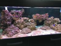 Marine Fish Tank, Stand and Accessories
