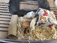 Gerbils behaving madly