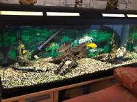 Large Fish tank, pump and war scene ornaments.