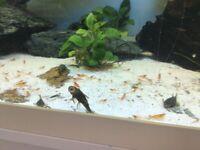 Tropical shrimps